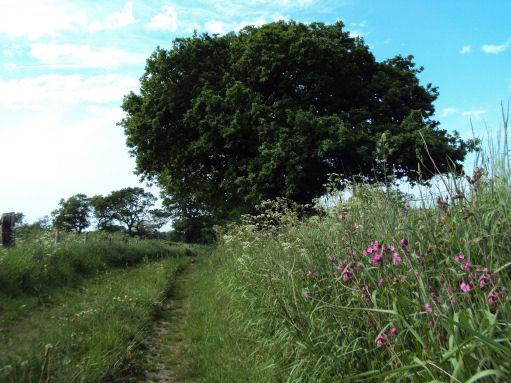 South Cheshire Way